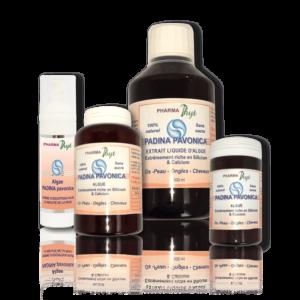 padina pavonica pharmaphyt